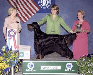Champlaign Valley Kennel Club BIS