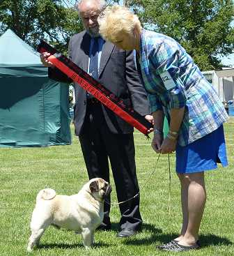 Triseter Kennels Pugs Gladiator R Up In Group 2011