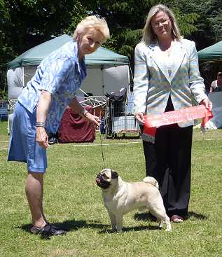 Pugs Triseter Kennels Elvin Runner Up In Group Dec 2010