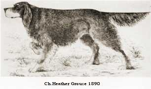 Ch. Heather Grouse