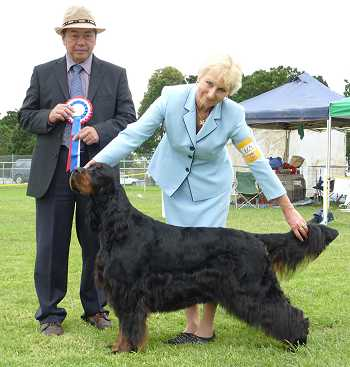 Gordon Setter Triseter Kennels Ice Best In Group 2011