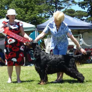 Gordon Setter Triseter Kennels Ice RU Best In Group 2010