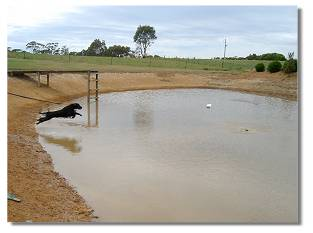 Dog jumping into the dam at Triseter