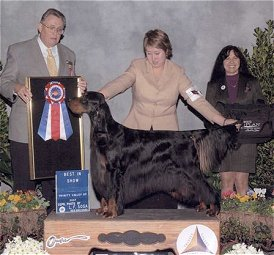 Trinity Valley Kennel Club BIS