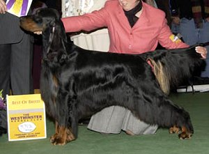 Nike with Kristin Winning BOB at Westminster Kennel Club 2006
